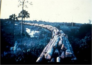 logging tram at bird rookery