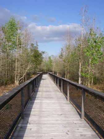 Bird Rookery Swamp Boardwalk