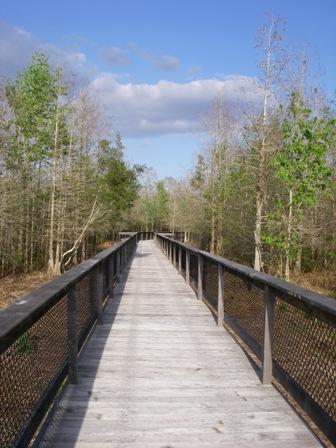Bird Rookery Swamp Boardwalk