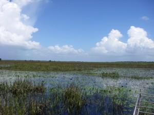 Open Water Corkscrew Marsh