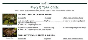 frog and toad call