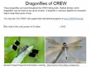 Dragonflies of CREW