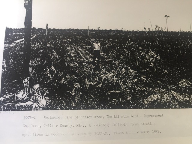Bob Byrd in logged area 1949