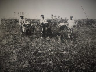 Crew planting seedlings 1949