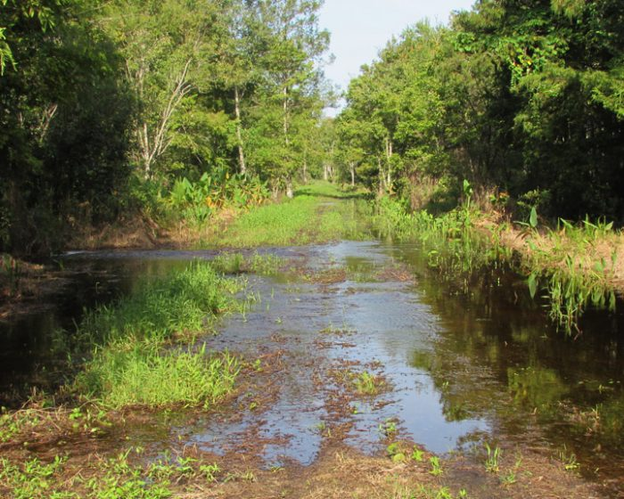 trail_water_0808